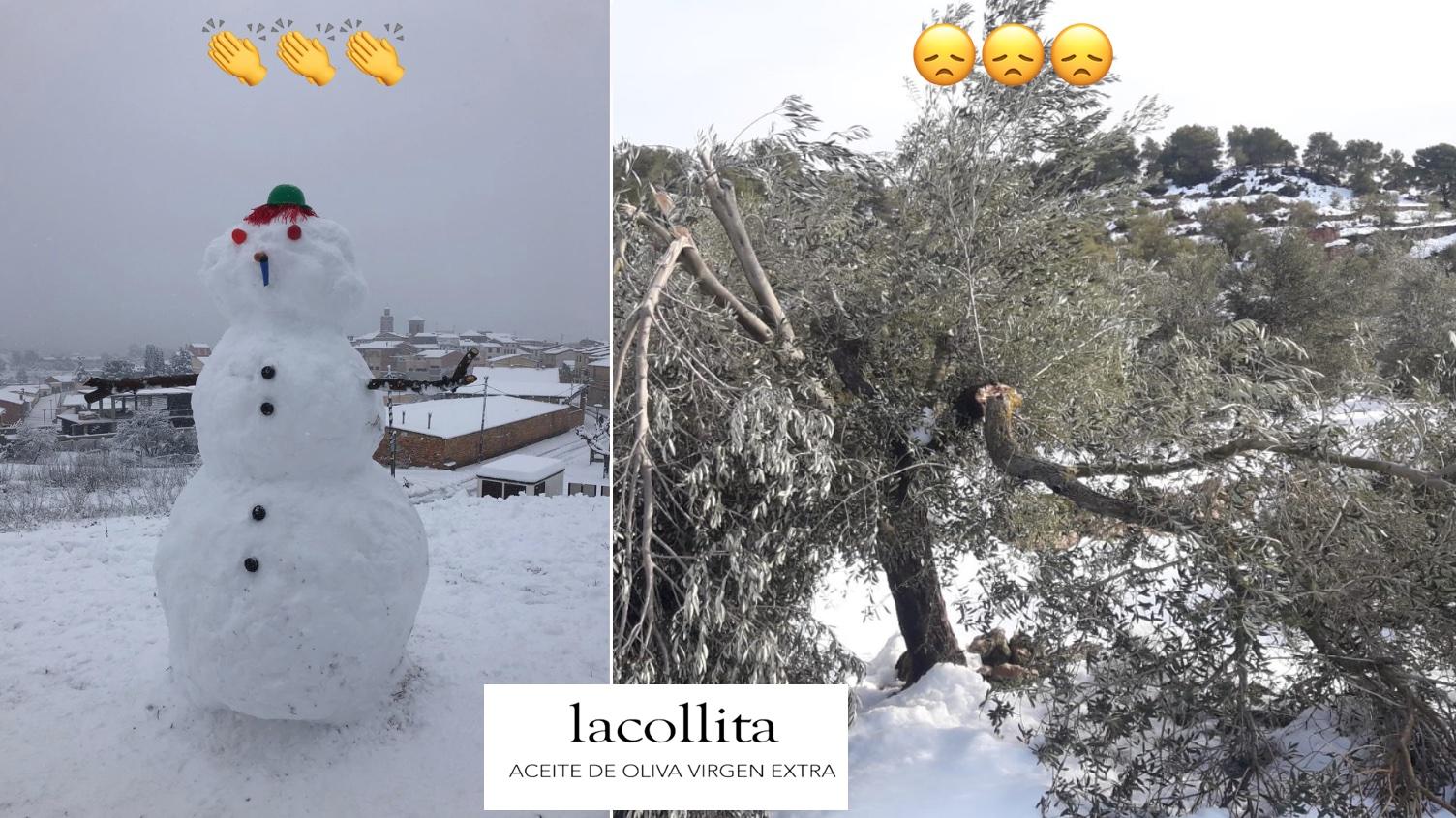 El Impacto Del Temporal Filomena En El Cultivo De Olivos